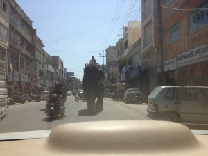 Working Elephant in Udaipur