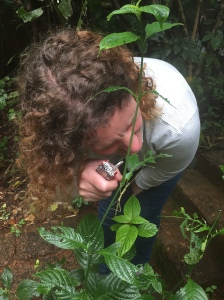 Catherine investigates a Stick Insect