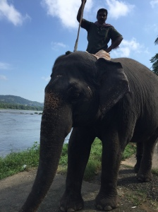 An elelphant and its trainer at the elephant training centre in Kodanad, a small village on the banks of the Periyar river about 40 km from Ernakulam and 65 km from the Fort Kochi