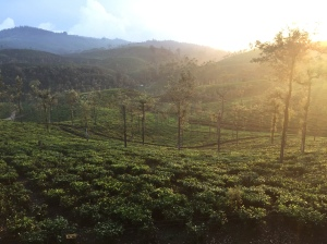 view from the accommodation looking onto the tea planation, wooden chalets on the stanmore estate part of Briar Tea bungalows in Valpari Tamil Nadu