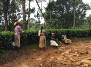 a group of 4 women taking a break from plucking tea on the dirt track next to tea bushes