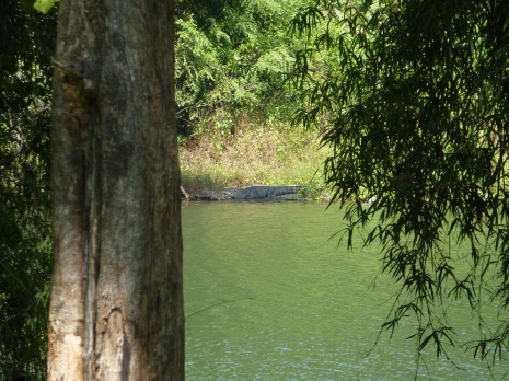 Crocodile sunning itself on the banks of the reservoir in Parambikulam Tiger Reserve